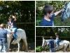 Obisk živali